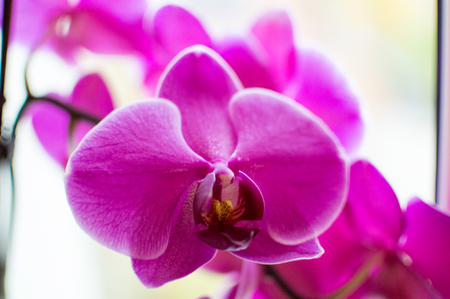 grown up: A orchid is grown up in thuringia Germany