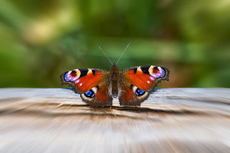 The small butterfly Tagpfauenauge on a tree trunk