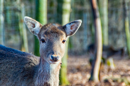 Small deer all alone in the forest Stock Photo