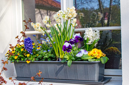 alpen: The Flower box with some various flowers