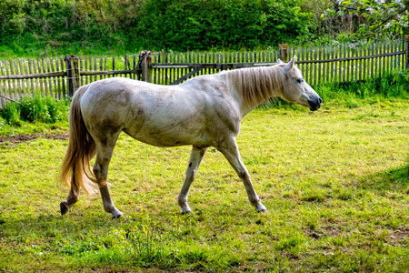 ongoing: A horse stalks over the horse string at the village Stock Photo