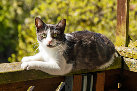 The Cat sunning himself on the balcony