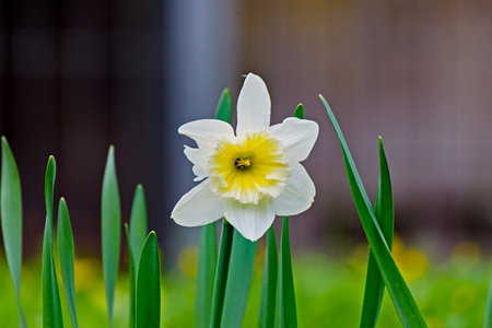 path to romance: A Easter bell flower in spring in thuringia