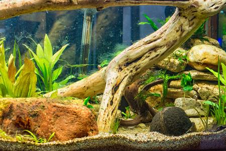 aquarium hobby: The decoration in aquarium at a elementary school Stock Photo