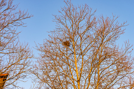 A Tree with a birds nest in the crown