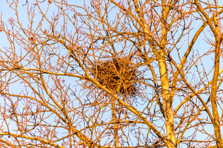 The Birds nest high on the tree Banque d'images