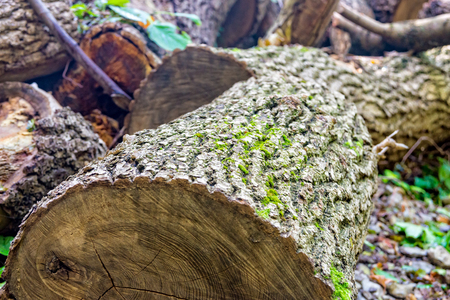 felled tree in the forest near the city Jena Stock Photo