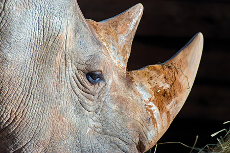The eye of a rhinoceros in the profile photographed