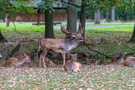 Deer in the wild 免版税图像