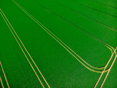 Tractor tracks on a field with winter wheat Banque d'images