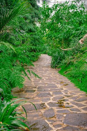 Path meanders through the jungle