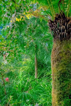 Jungle with palm trees and wild plants