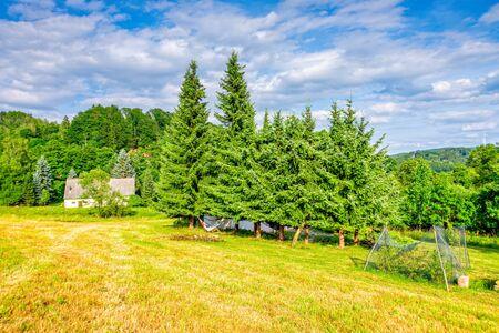 Coniferous trees on a cornfield in the Czech Republic