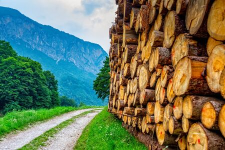 Tree trunks on the hiking trail in South Tyrol in Italy