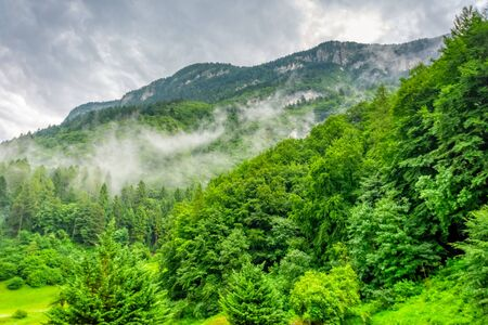 Approaching Fog in the forest in South Tyrol in Italy Stock fotó