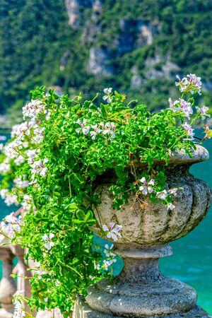 Geraniums in Riva del Garda in Italy on Lake Garda