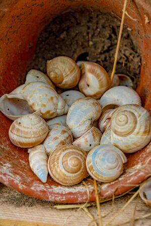 Snail shells in a flowerpot
