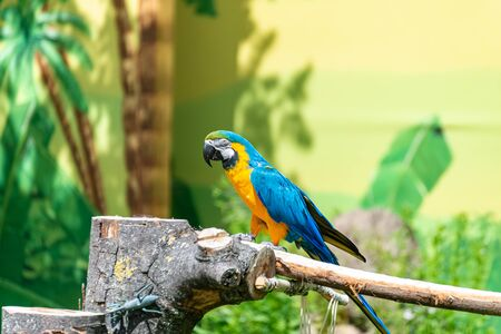 Ara parrot sitting on a branch