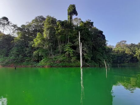 There are bunch of big tree branches on the surface of water which is can measure the deep of the lake
