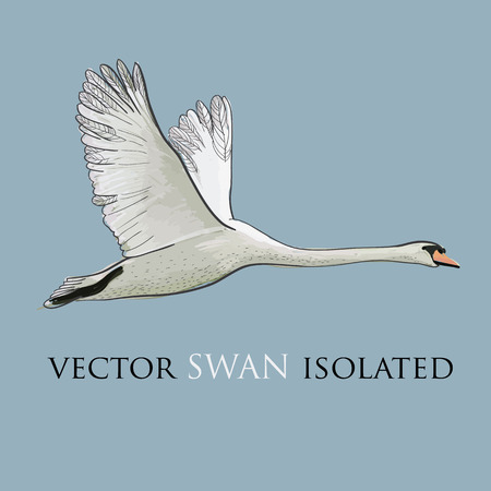 illustration of Flying Swan isolated object, Watercolor, drawing effect. Hand drawn graphic design.