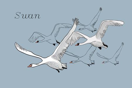 흰색 비행 백조 드로잉의 그림입니다. 손으로 그린, 낙서 그래픽 디자인 조류와 비행. 파란색 배경에서 고립 된 개체입니다. 스톡 콘텐츠 - 90157943