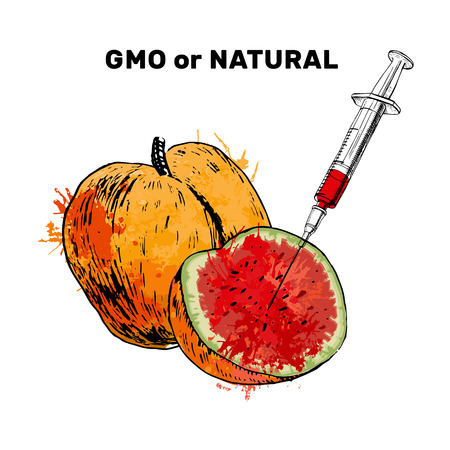 illustration of Sketch Injection into apricot. Concept for Genetically modified fruit and syringe with colorful chemical GMO food. 일러스트