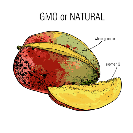 illustration of Sketch mango. Sample of genome isolation from the whole. Concept for Genetically modified fruit and syringe with colorful chemical GMO food.