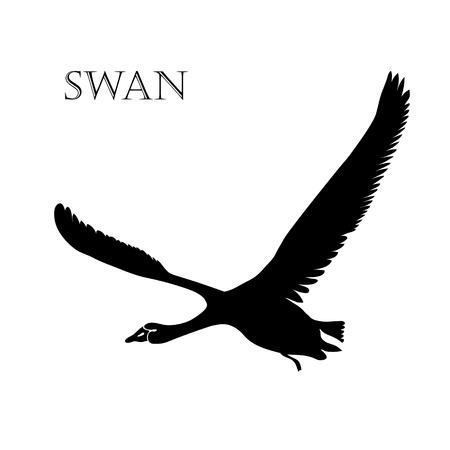 illustration of black swan logo silhouette.