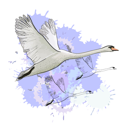 Vector illustration of drawing Flying flock Swans with watercolor spot effect. Hand drawn, doodle graphic design with birds.