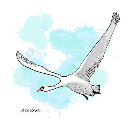 illustration of drawing Flying Swan with watercolor spot effect. Hand drawn, doodle graphic design with bird. 일러스트
