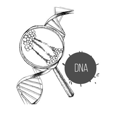 Vektor-Illustration der handgezeichneten Skizze der DNA-Struktur unter der Lupe. Gentechnik zeichnen.