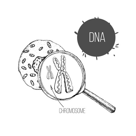 Vector illustration of hand drawn sketch the structure of DNA under magnifier. Drawing genetic engineering. Cell structure.