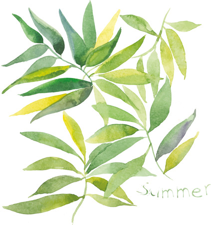 Vector illustration of green leaves with watercolor effect. Branch on white background.