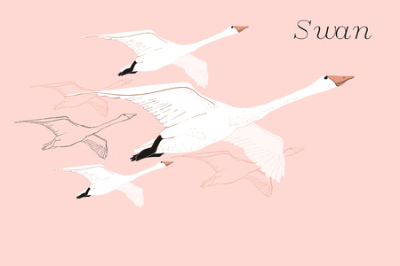 Vector illustration of drawing Flying Swans. Hand drawn, doodle graphic design with birds. Isolated object on blue backdrop. 일러스트