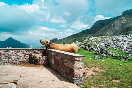 This photo of a cow drinking water from a tap is taken in a refuge in a mountain pass in Asturias. The photo is a horizontal shot and blue and green predominate.