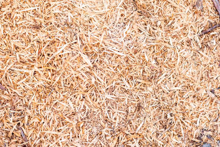 Wallpaper of sawdust shavings.The photograph is taken from a zenithal point of view and can be used as a wallpaper or graphic resource.