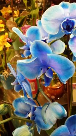 Gorgeous Orchid Flowers Stock fotó