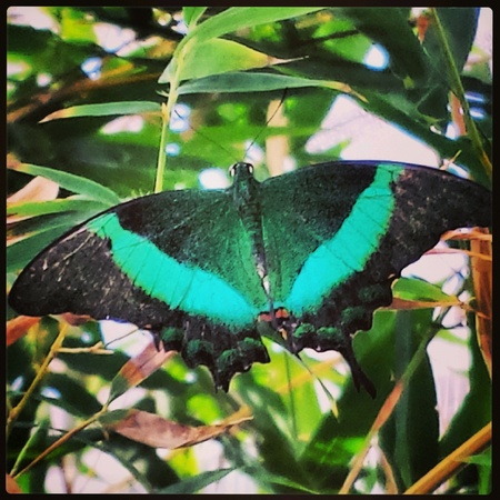 Bright green winged butterfly