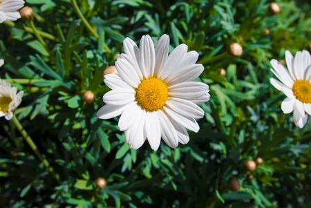 polen: Spring Flower