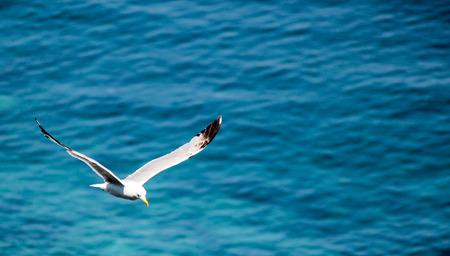 sorrento: Sorrento Seagull