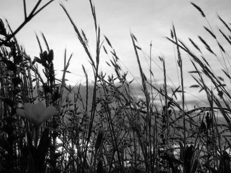 Black and white shot of flower growing through the weeds photo