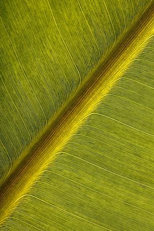 A close up shot of banana leaf placed diagonally photo