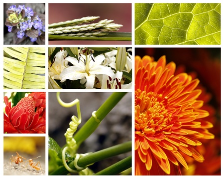 Nature collage with brightly colored fauna and flora Stock Photo - 10527361