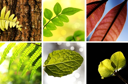 Collection of young leaves in spring season Stock Photo - 10794741