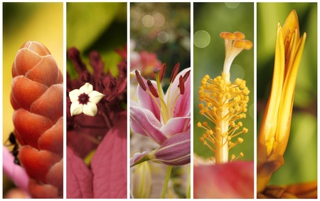 Collection of flowers close up with shallow depth of field photo