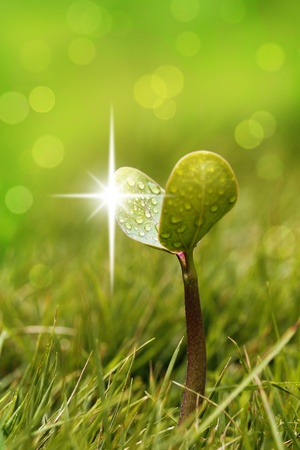 emerge: Seedling with shining water droplets Stock Photo