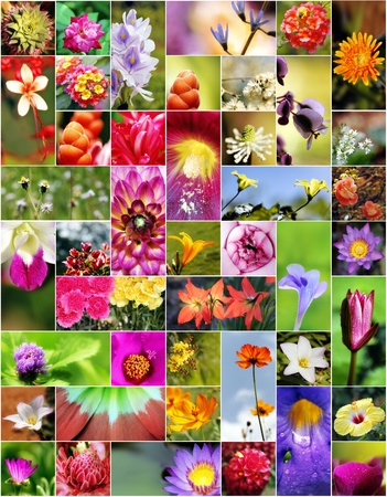 ginger flower plant: Collage of flowers in different shapes, colors and designs.