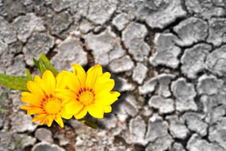 Concept of persistence. Flowers blooming in dry land photo
