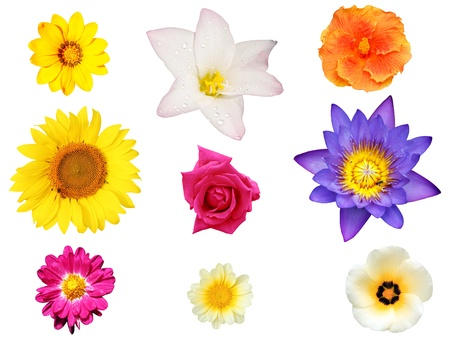Isolated collection of flowers like water lily, chrysanthemum, daisy and hibiscus photo