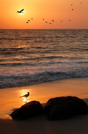 Flock of flying birds, crane and crow at seashore with a golden sun in the backdrop photo